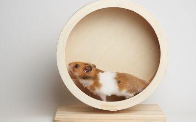 Tuer son hamster